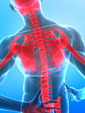 Menschlicher Röntgenstrahldorn Stockbild