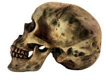 Menschlicher Schädel Stockfotografie