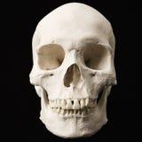 Menschlicher Schädel. Lizenzfreies Stockfoto