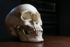 Menschlicher Schädel auf dem Tisch lizenzfreie stockbilder