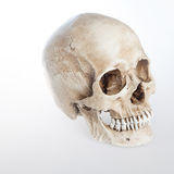 Menschlicher Schädel auf lokalisiertem weißem Hintergrund, dazu Stockfoto