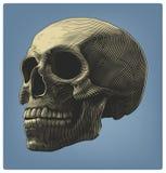 Menschlicher Schädel in der Stichart Lizenzfreie Stockfotografie