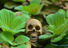 Menschlicher Schädel des Stillleben-abstrakten Begriffs auf Wasser Lizenzfreies Stockfoto