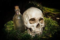 Menschlicher Schädel des Stilllebens im Garten Stockbilder
