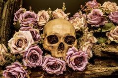 Menschlicher Schädel des Stilllebens mit Rosenhintergrund Lizenzfreies Stockbild