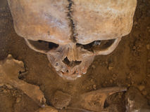 Menschlicher Schädel gesehen von oben Lizenzfreie Stockbilder