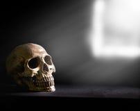 Menschlicher Schädel, lokalisiert auf schwarzem Hintergrund Stockbilder