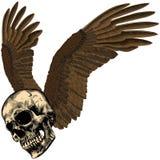 Menschlicher Schädel mit Adler ` s Flügeln Stockfoto
