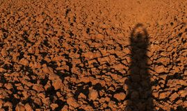 Menschlicher Schatten auf Bodenklumpen auf dem Reisgebiet vor Betriebsreis für braunen Hintergrund Lizenzfreies Stockbild