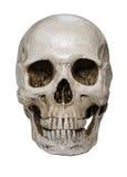 Menschlicher Schädel Stockfotos