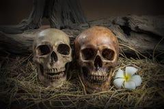 Menschlicher Schädel der Stilllebenpaare mit Plumeriablume und -heu Stockbild