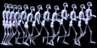 Menschlicher skelegon Betrieb Stockbild
