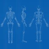 Menschlicher Skeleton Plan-Vektor Lizenzfreie Stockfotografie
