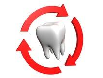 Menschlicher Zahn Lizenzfreies Stockfoto