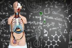 Menschliches Anatomiemannequin auf dem Hintergrund von chemischen Formeln Lizenzfreies Stockfoto