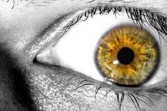 Menschliches Auge, das Überraschungs- und Furchtmakronahaufnahmehintergrund ausdrückt Lizenzfreies Stockfoto