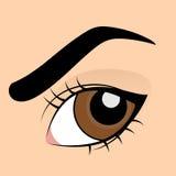 Menschliches braunes Auge Stockbild