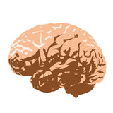 Menschliches Gehirn Lizenzfreie Stockbilder