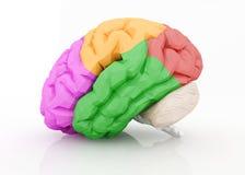 Menschliches Gehirn auf Weiß Stockfotos