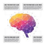 Menschliches Gehirn - farbiges Polygon Infographic-Konzept Stockfotografie