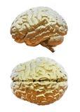 Menschliches Gehirn golden Stockfotografie
