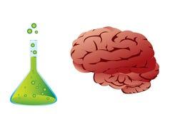 Menschliches Gehirn, Laborglaswaren Lizenzfreie Stockfotografie