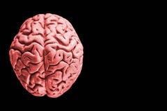 Menschliches Gehirn lokalisiert auf schwarzem Hintergrund mit Freiexemplarraum für Text oder digitalen Grafikentwurf ein menschli lizenzfreie stockfotografie