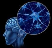 Menschliches Gehirn mit Abschluss oben der aktiven Neuronen Lizenzfreies Stockbild