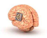 Menschliches Gehirn mit Computer-Chip Stockbilder