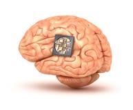Menschliches Gehirn mit Computer-Chip Stockfotos