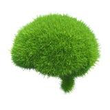 Menschliches Gehirn wird mit dem grünen Gras bedeckt, das auf weißem Hintergrund lokalisiert wird Lizenzfreie Stockfotografie