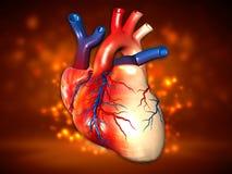 Menschliches Herz lizenzfreies stockbild