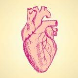 Menschliches Herz der Skizze in der Weinleseart Stockfoto