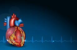 Menschliches Herz und blauer Hintergrund stock abbildung