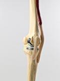 Menschliches Knie repacement stockfoto
