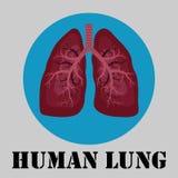 Menschliches Lungenemblem Stockfotos
