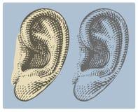 Menschliches Ohr in gravierter Art Stockbilder