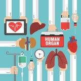 Menschliches Organ für das Versetzungsdesign flach Stockfoto