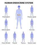 Menschliches Schattenbild mit den endokrinen Drüsen Ikonen eingestellt Lizenzfreie Stockfotos