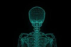 Menschliches Skeleton Wireframe-Hologramm in der Bewegung Nette Wiedergabe 3D Lizenzfreie Stockfotografie