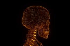 Menschliches Skeleton Wireframe-Hologramm in der Bewegung Nette Wiedergabe 3D Stockbild