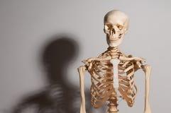 Menschliches Skelett Lizenzfreies Stockbild