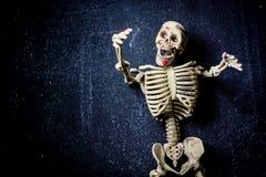 Menschliches Skelett stockfotos