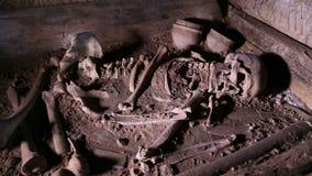 Menschliches Skelett, Schädel, Knochen, grub eine Beerdigung aus stock footage
