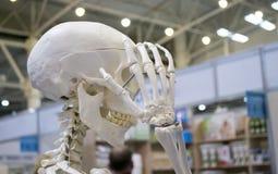 Menschliches Skelett und Plan einer menschlichen Schädelnahaufnahme, stockfotografie