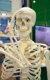 Menschliches Skelett und Plan einer menschlichen Schädelnahaufnahme, stockbild