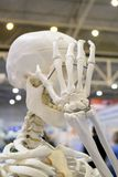Menschliches Skelett und Plan einer menschlichen Schädelnahaufnahme, stockfotos
