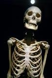 Menselijk Anatomie echt skelet Stock Afbeelding