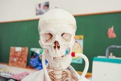 Menselijk anatomiemodel in een biologieklasse Stock Afbeelding