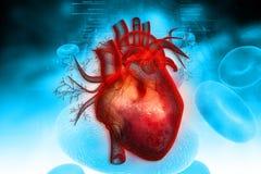 Menselijk hart Royalty-vrije Stock Foto's